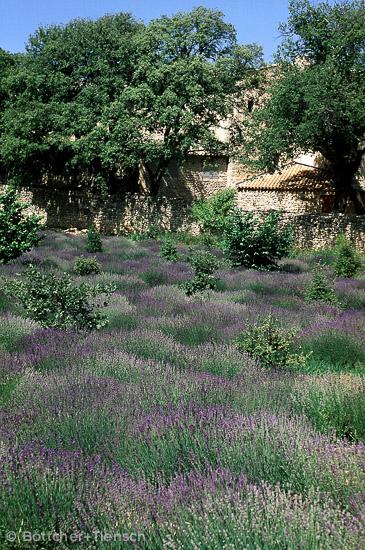B U00f6ttcher   Tiensch  Fotos Provence